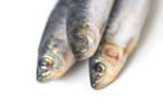 Omega-3s from fish oil