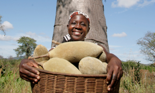 Baobab fruit and woman with PhytoTrade Africa